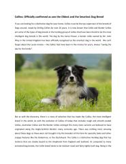 stirling collies clear water.pdf